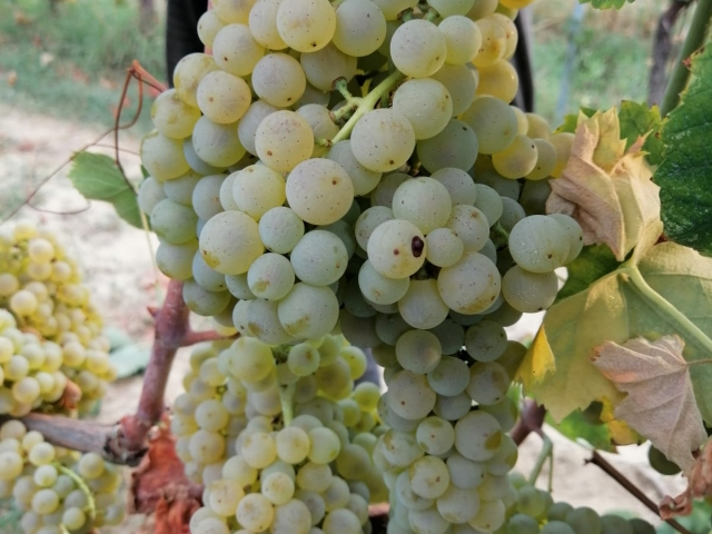Le Crete Extra Dry Vinho Espumante Millesimato 6