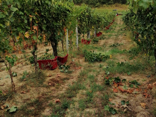 Le Crete Extra Dry Vinho Espumante Millesimato 4