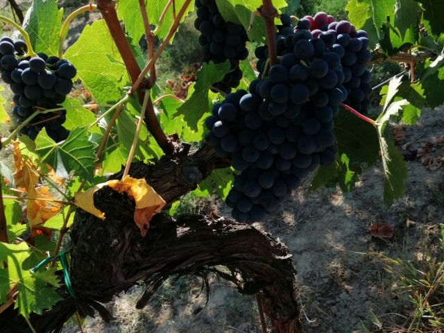 Le Crete Extra Dry Vinho Espumante Millesimato 3