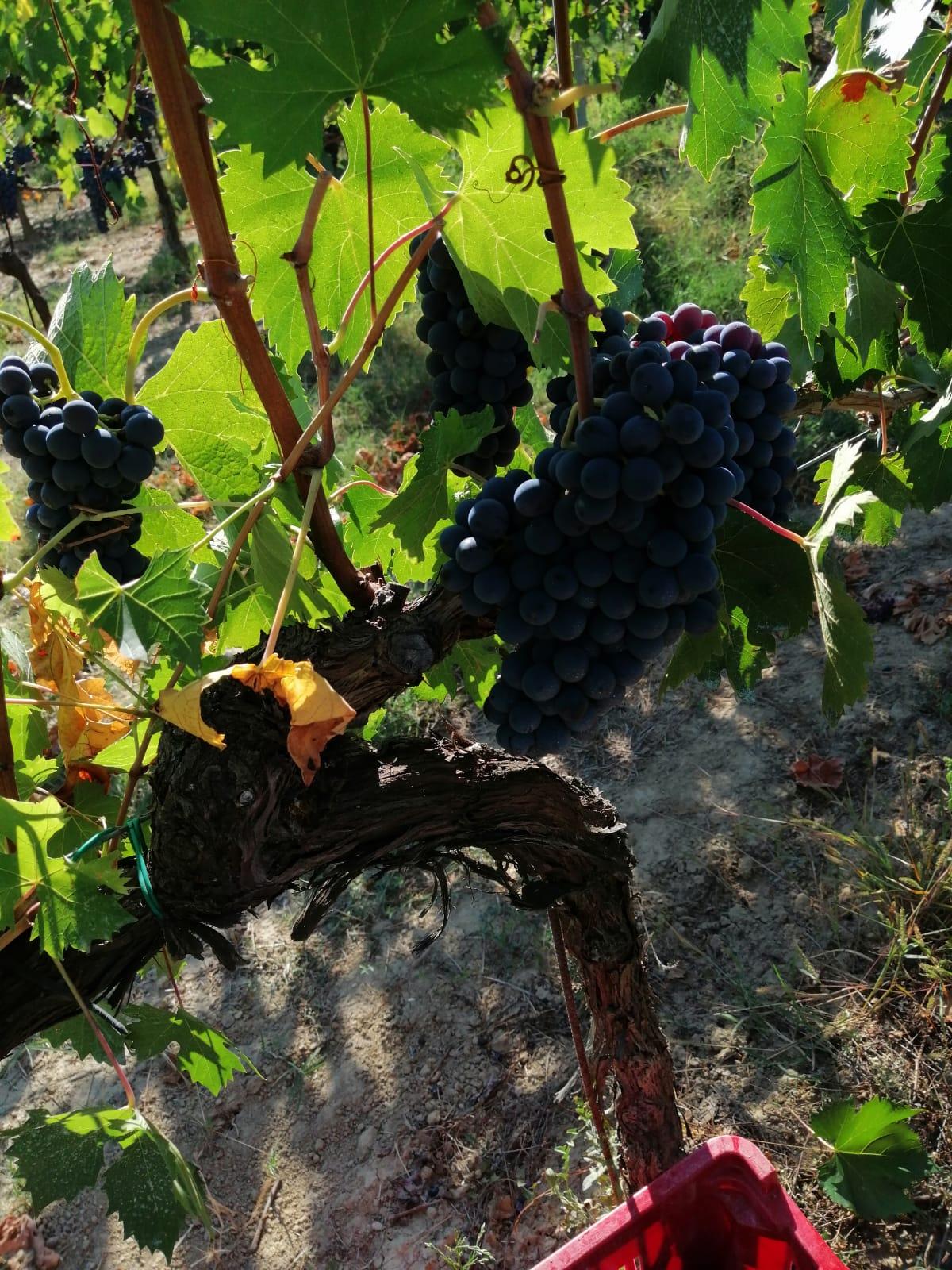 Le Crete Extra Dry Vinho Espumante Millesimato 8